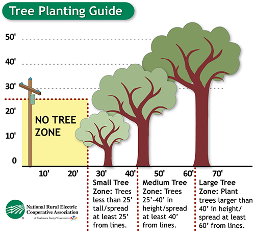 Tree Trimming guide image